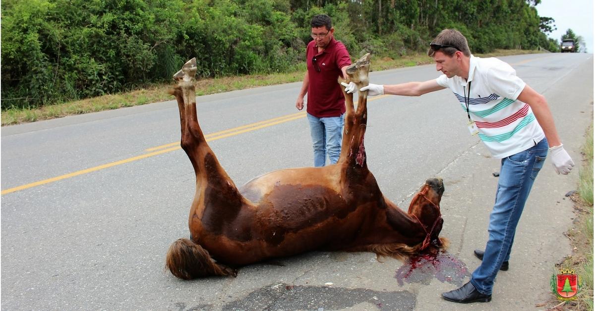 Cavalo morto atropelado reforça importância do recolhimento de animais soltos