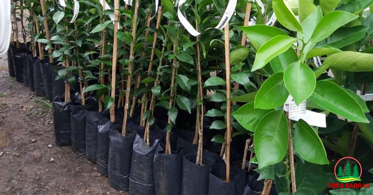 Encerradas as inscrições para aquisição de mudas frutíferas em Três Barras
